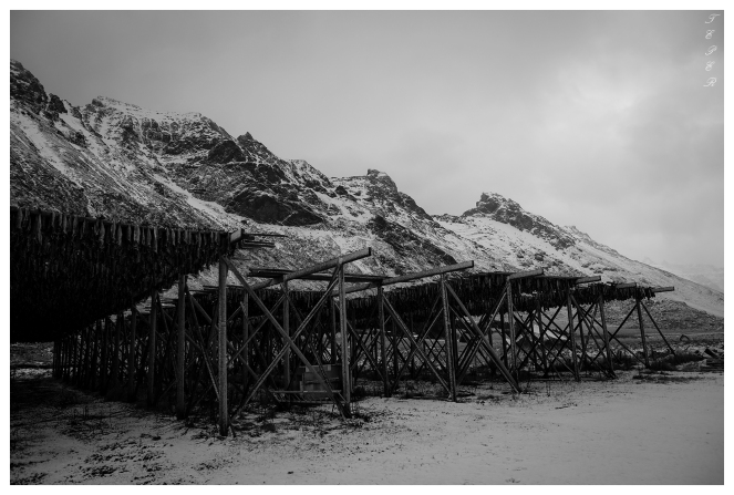 Drying fish, Lofoten Norway. Canon 5D Mark III | 24mm 1.4 Art
