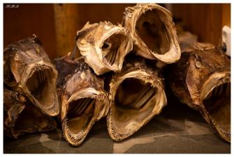 Dried fish on display, Lofoten Norway. Canon 5D Mark III | 85mm 1.2L II