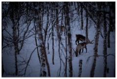 Raindeer at Polar Park, Norway. Canon 5D Mark III | 180mm 2.8 OS Macro